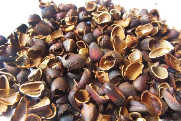 Скорлупа кедрового ореха используется в косметологии, фармацевтике и в народной медицине