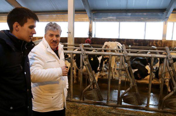 Павел Грудинин на молочной ферме