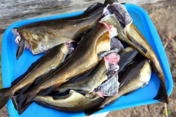 Копченая рыба потассу