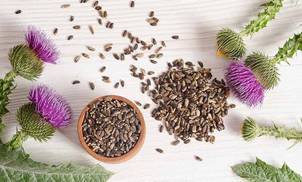 Семена расторопши для лечения поджелудочной железы
