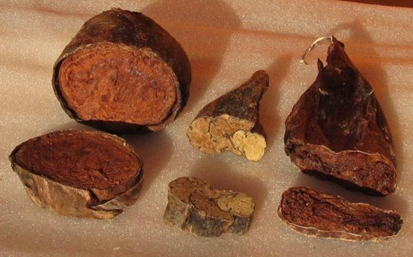 Применение бобровой струи для лечения мужских заболеваний