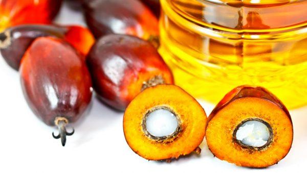 Масло добывают из плодов пальмы