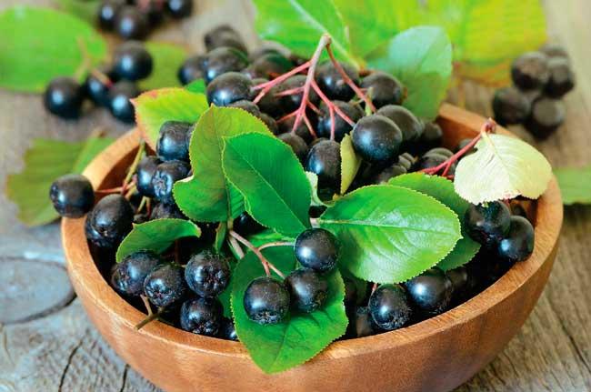 Арония черноплодная защищает кожу от