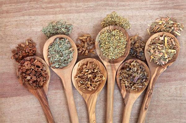 Лечебные свойства коры белой ивы известны еще с древних времен