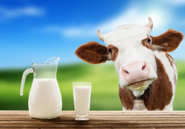 Очищение самогона молоком является самым эффективным