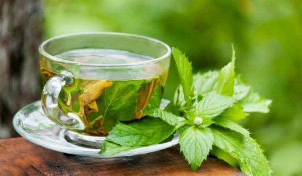 Чай из малиновых листьев поможет вылечить простуду