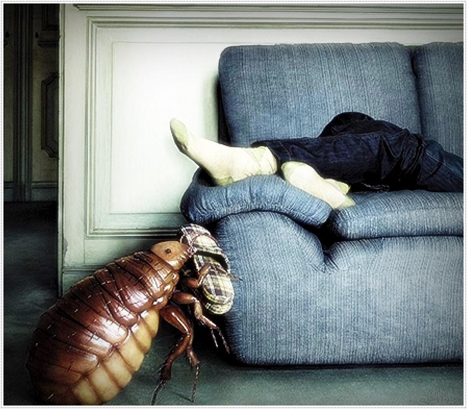 как бороться с клопами в домашних условиях самостоятельно