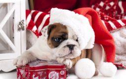 Новогодний пес