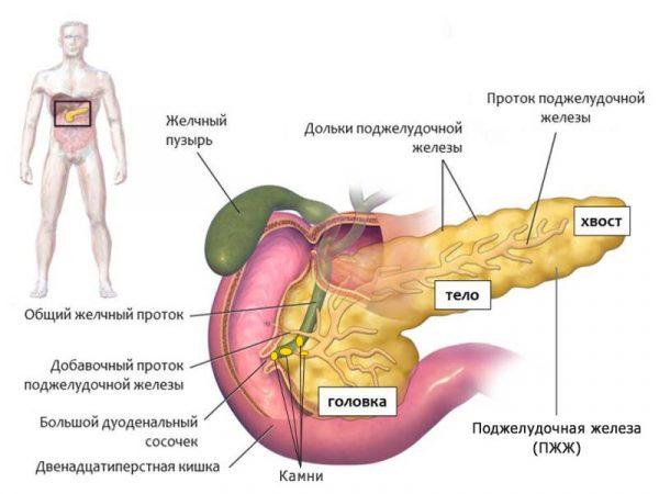 Развитие панкреатита у человека