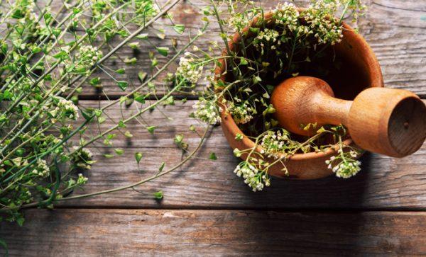 Растение пастушья сумка используется в качестве специи в кулинарии