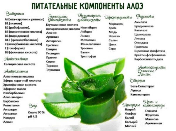 Питательные компоненты столетника