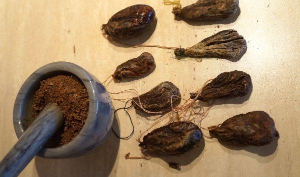 Из бобровой струи можно приготовить лекарственную настойку