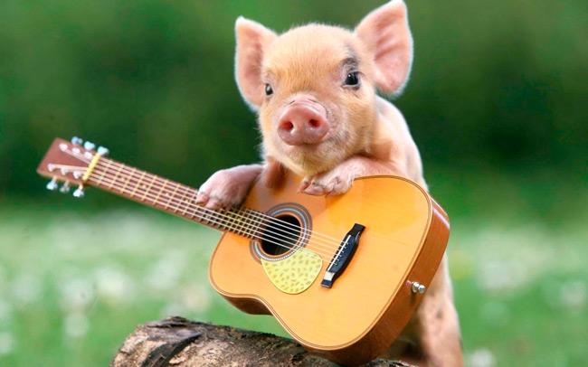 Рожденные в год свиньи имеют общие черты