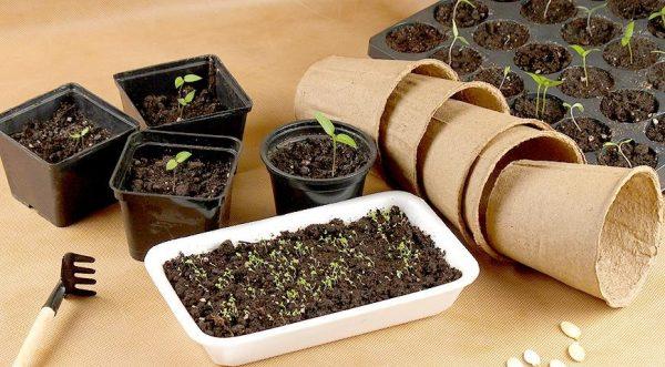 Какую тару лучше выбрать для посева семян