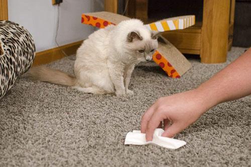 Средство для избавления кошачьей мочи