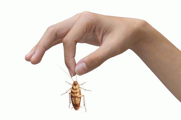 Для избавления от тараканов можно использовать покупные средства