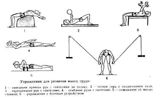 Правила при выполнении упражнений для грудных мышц