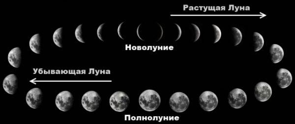 Как влияет Луна на посевы семян