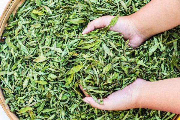 Высушенные листья стевии