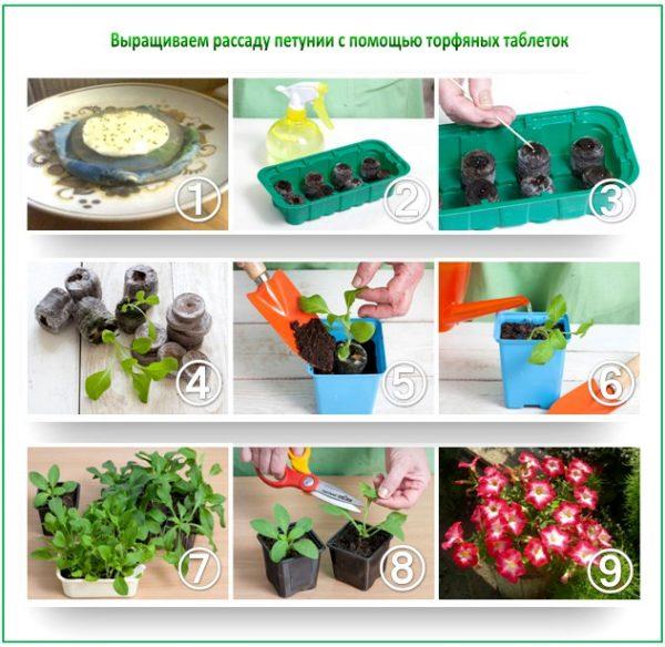 Пошаговая инструкция по высадке семян петунии