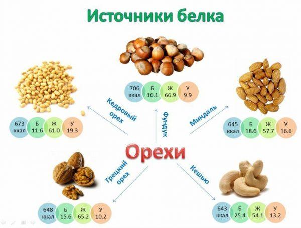 В орехах содержится большое количество белка