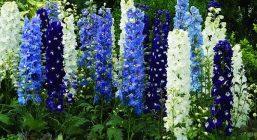 flower1_0