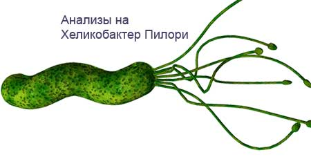 helicobacter-pylori-0