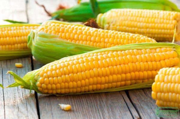 Полезные свойства кукурузных отрубей