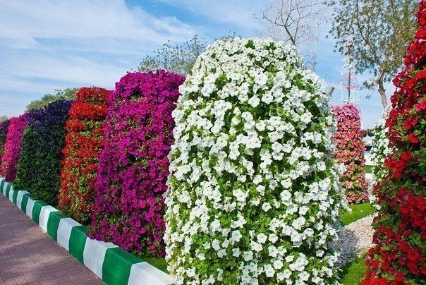 Вертикальные клумбы для выращивания петунии
