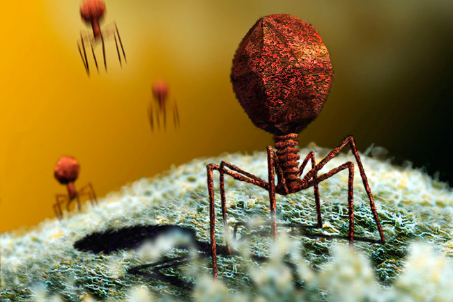 Как выглядит бактериофаг