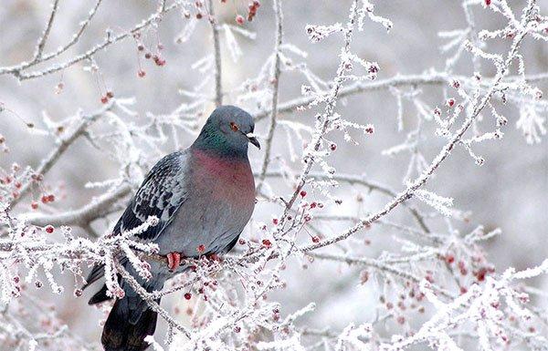 Во второй декаде марта может резко упасть температура воздуха