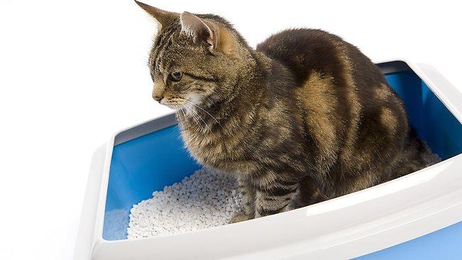 Как отучить взрослого кота гадить в неположенном месте народные средства и парочка советов