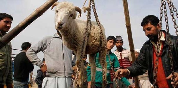 Жертвоприношение барана на Курбан Байрам