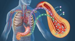 Vyrabotka-insulina
