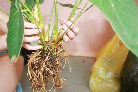 Когда пересаживать растение