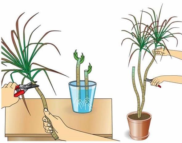 Как обрезать растение
