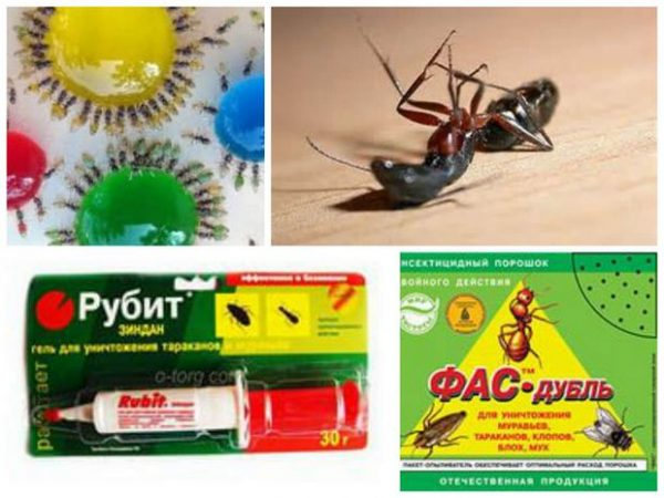 Эффективные покупные средства в борьбе с муравьями