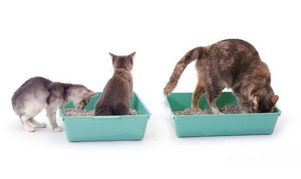 Выберите подходящий лоток для кота