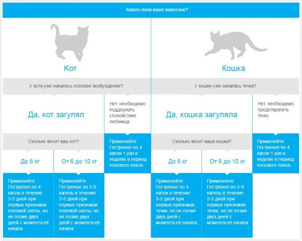 Что делать если кот или кошка гадят в неположенном месте