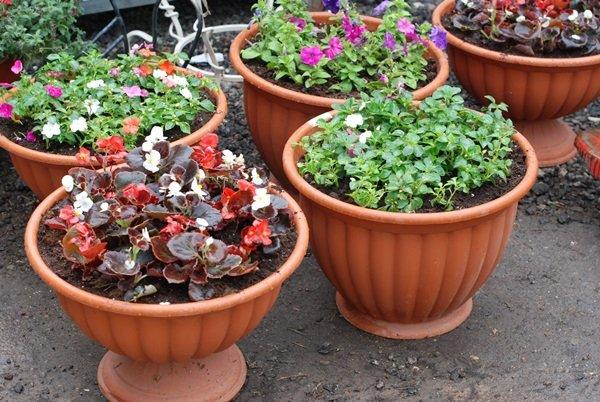 Посадка цветущих растений