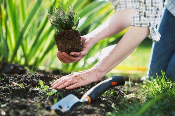Высадка цветущих растений