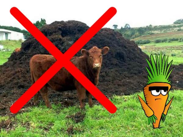 Коровяк не желательно использовать в качестве удобрения