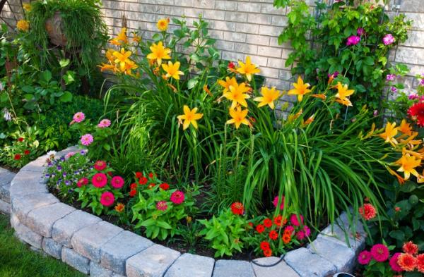 На задний план клумбы лучше посадить высокие растения