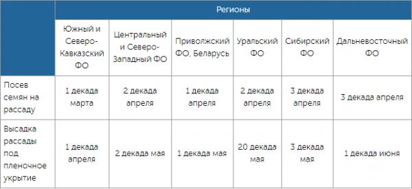 Когда садить семена огурцов на рассаду в разных регионах России