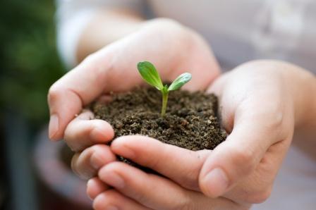 Семена огурцов высаживают в хорошо прогретую землю