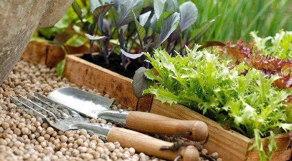 Какие работы можно выполнять в саду