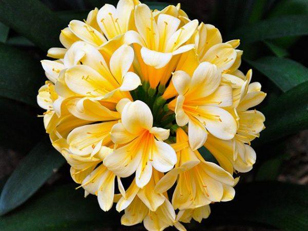 Как цветет растение
