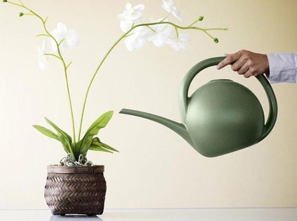 Как поливать растение