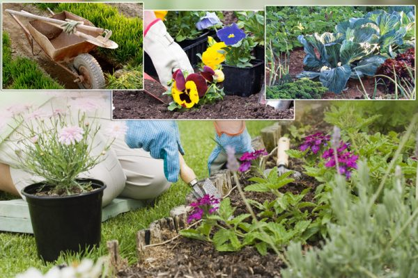 Какие цветы можно посадить в саду