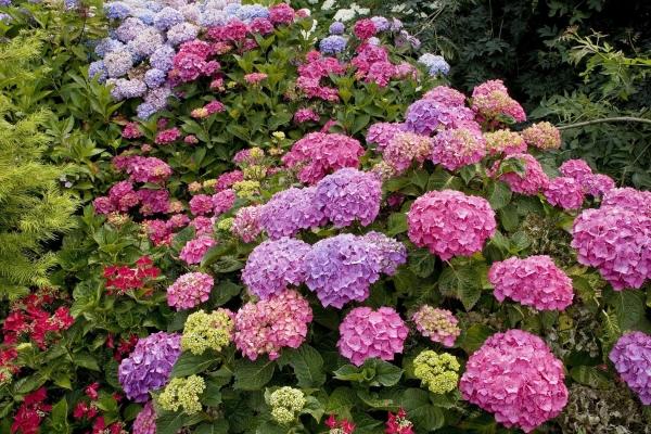 kartinki24_flowers_0032